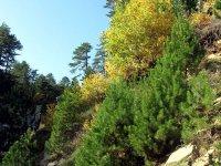 Kaz Dağı